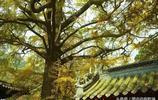 探訪嶗山太清宮,曾是全真派駐地,一代宗師張三丰終年在此修煉