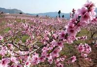 忘了龍泉桃花吧!成都周邊8處桃花祕境景美還不擠!