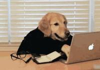 """為什麼說狗生來就聰明還通人性?看完它的""""家譜"""",不得不信……"""