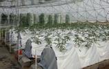 位於韓國的蔬菜垂直農場,蔬菜生產效率高