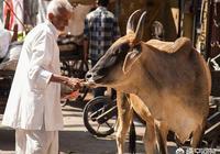 尼泊爾為何殺牛?