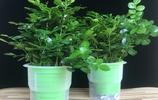 香味堪比香水的8種綠植,好養不怕冷,養在陽臺,滿屋香,像花園