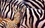 動物圖集:欣欣向榮的動物世界