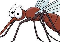 蚊子的血液是什麼顏色的?蚊子有血管嗎?