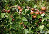 家裡種植了280畝的油茶樹,去年開始有收成,怎麼拓展銷路?大家有什麼好的建議啊?
