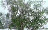 壩上木蘭圍場罕見的夏天的雪景