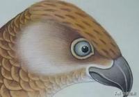 於非闇工筆黃鷹繪畫技法,值得收藏!