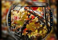 尋一處靜幽,賞一季秋景如畫