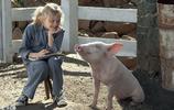 """《夏洛特的網》""""豬角""""萌出天際,好想養一隻豬當寵物啊!"""