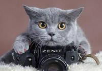 貓咪營養不良症狀表現,貓咪營養不良會不會貧血