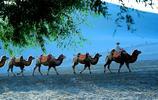 繁思折風景攝影作品系列九十一(金色沙漠駝鈴聲)