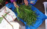一塊五一把的野菜,不用清洗可直接炒