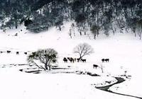 旅遊指南:關山草原美麗雪景帶您走進銀裝素裹的童話世界