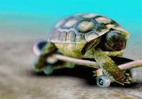 """這種烏龜不能買!江津一大學生買賣""""烏龜""""被刑拘"""