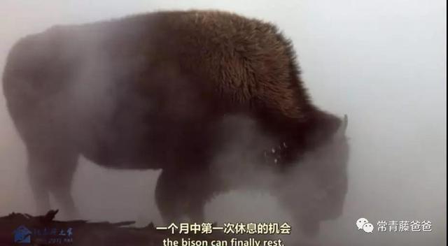 適合寒假給孩子看的科普紀錄片:冬天動物怎麼過冬?