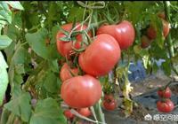 在農村種蔬菜大棚能生活嗎?有什麼要注意的地方?