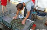 梭子蟹橫行 他們卻賣起了蝦 竟然以少勝多 掙的不比賣蟹子的少