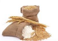 小麥行情:近日小麥價格以穩為主,高質量小麥依然搶手
