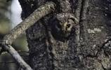 5張考驗眼力的照片,每張裡面都藏了一隻動物,你能發現它嗎?