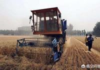 北方小麥還有20天進入收割期,大家覺得機器收割費用一畝地多少錢合適?