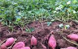 營養價值超高的農產品