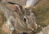 行政主管辭職回鄉養兔,兔子數量達1000只