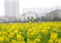 """你知道什麼是""""兩春年""""嗎?農民說""""兩春夾一冬,黃土變成金""""!"""