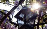 這八種的爬藤植物一開花就成瀑布,很簡單就讓你的庭院成為小花園