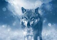 《狼》:人與狼是世仇
