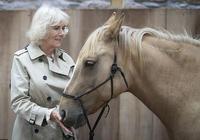 71歲卡米拉比凱特王妃還會穿!1萬3米色風衣搭木耳邊襯衫太高貴了