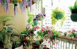 建議大家:不管有錢沒錢,客廳一定要養這盆栽,冬天凍不死好養活