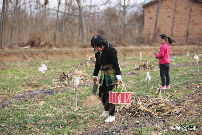 春天郊遊田野裡挖野菜,農村人不稀罕的東西,城裡人吃的有滋有味