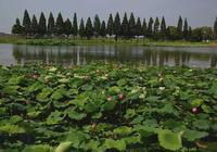見證洪湖清水大閘蟹的發展