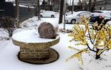 下雪了!和我在豫北的街頭走一走