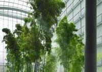 26種·竹子大全-超級豐富的竹子種類,收藏學習