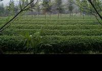 你喜歡農村生活嗎?如果有條件你會選擇在農村生活一輩子嗎?