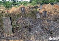 農村墳地的改革,如何對待原有墳地?