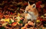 動物圖集:動物精選