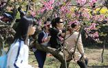 清明小長假周潭賞桃花 遊客爬樹摘花踩踏