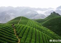 現在農村種植業前景如何?