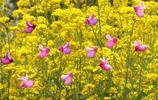春天的花既好看又好玩,稍微動動腦,讓春花展示出與眾不同的美