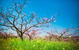 圖蟲風光攝影:春天的棗陽