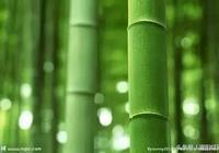 牛人:灌陽縣農民把一根毛竹從12元賣到240元