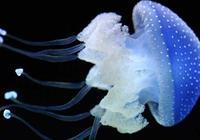 被水母蟄了有毒嗎 被水母蟄了怎麼辦