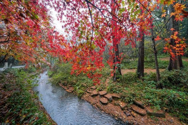 賞楓葉而來,我遇夢溪山莊