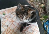 流浪貓找到家了!