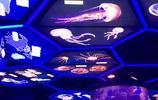 夢幻水母館,領略上萬只不同品種的珍奇水母