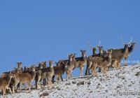中國國家重點保護野生動物名錄