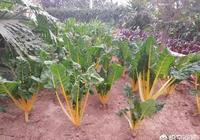 假如你在農村有一個院子,你打算種菜還是種花呢?