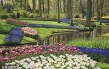這個春天一定要留給荷蘭,一個被鮮花包圍的國家